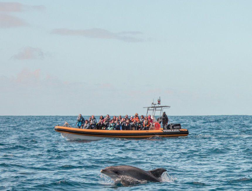 Delphine Wale Rundreise Azoren
