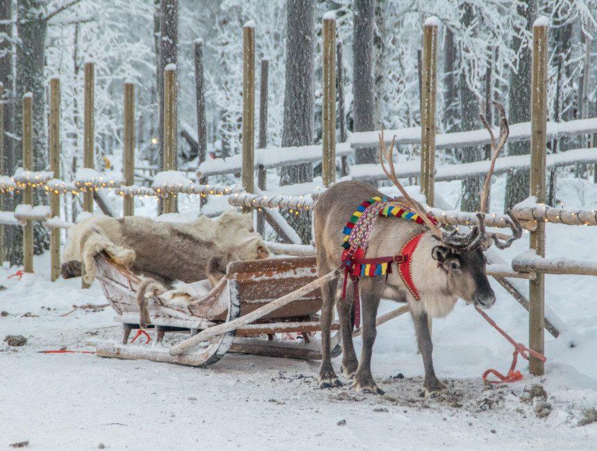 Rentierfütterung Tromso Ausflüge