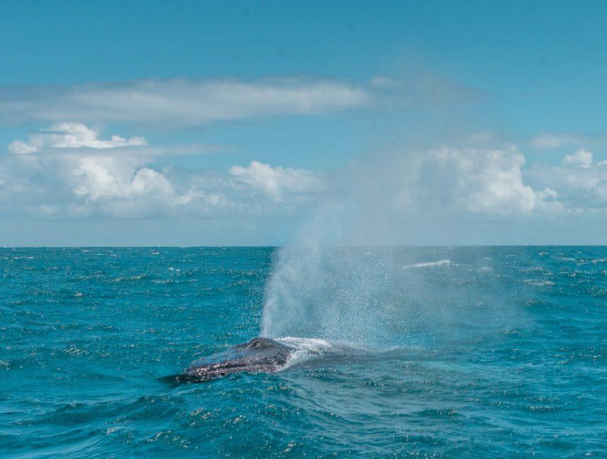 whale watching Dominikanische Republik