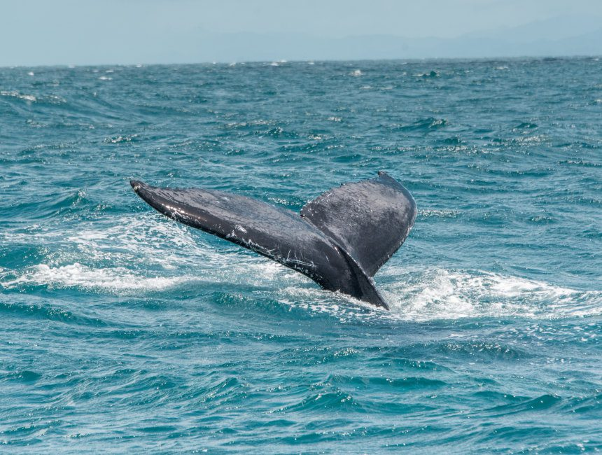 Wale Dominikanische Republik sehenswuerdigkeiten
