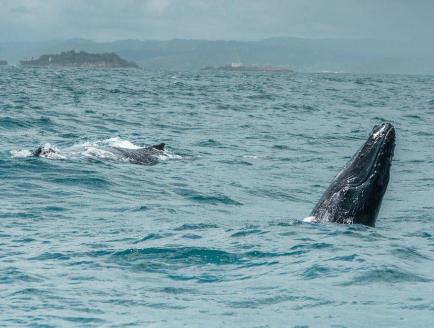 Ausflüge Punta Cana Samana Wale