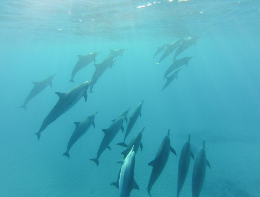 Delfinen Dominikanische Republik