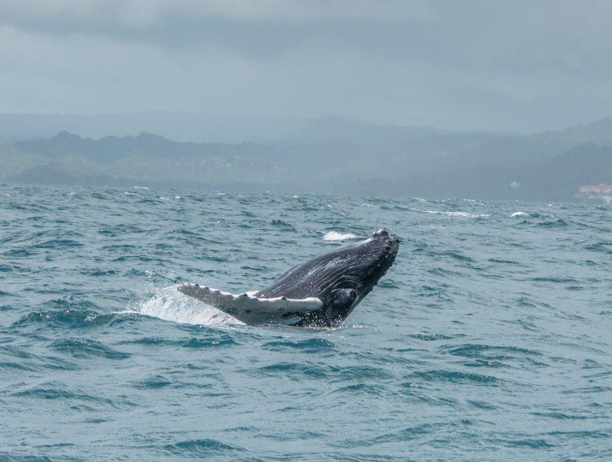Dominikanische Republik Touren Wale