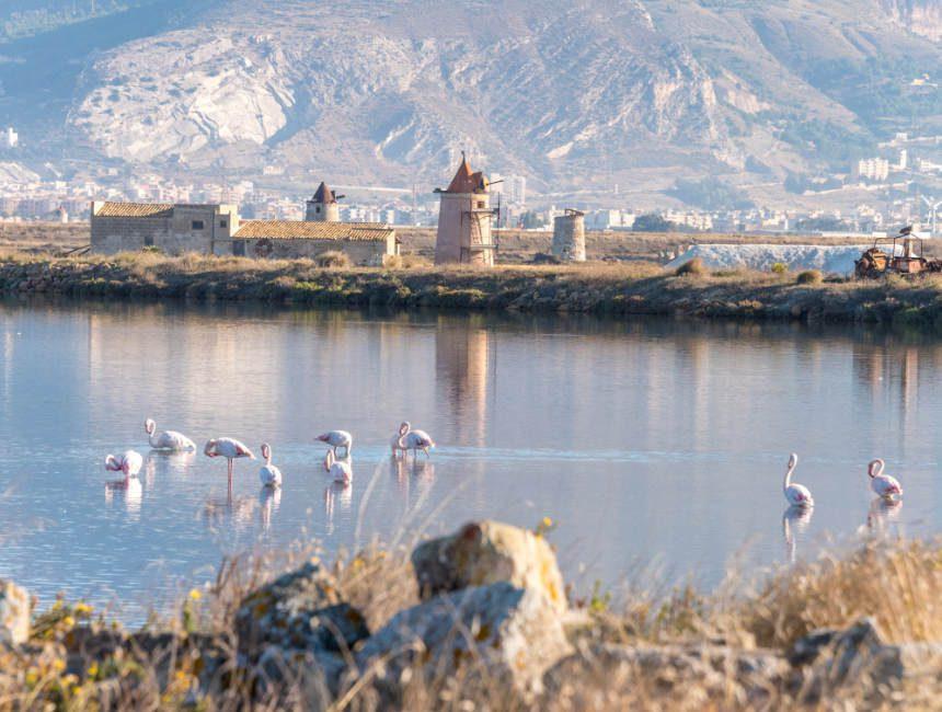 Salzpfannen Trapani Flamingo