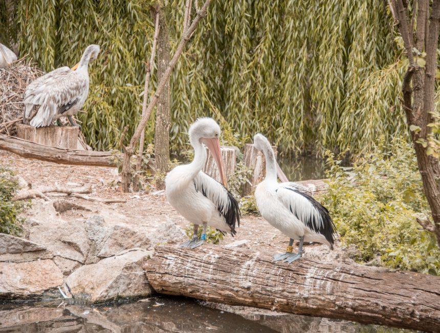 top Sehenswürdigkeiten Berlin Zoo