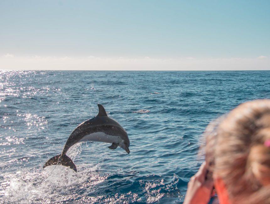 Delfinen Madeira