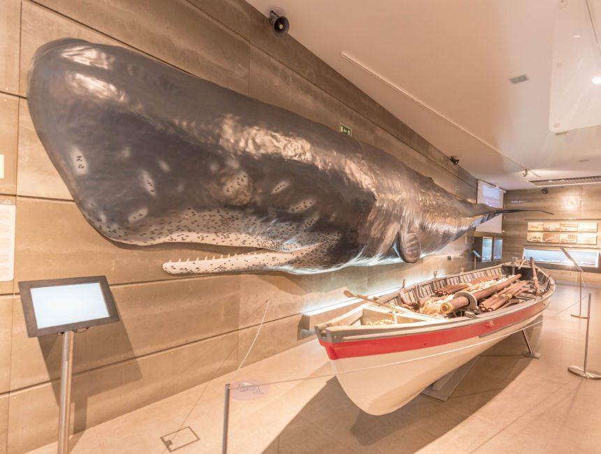 musea da-baleia-madeira